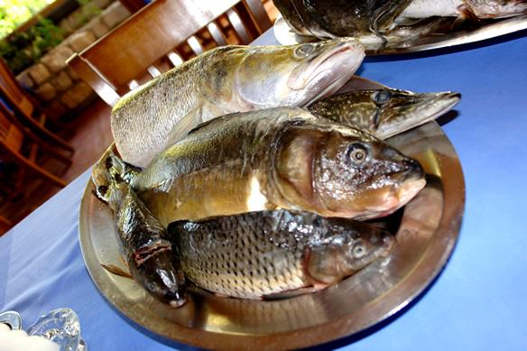 herring masonry llc